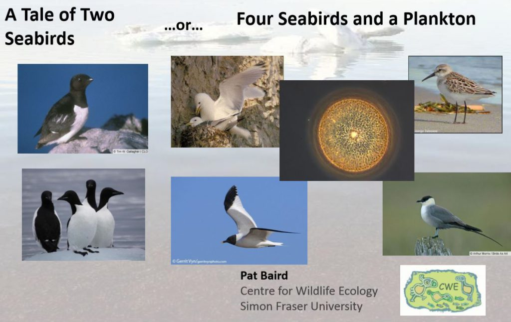 A Powerpoint slide with a single plankton pictured among various arctic birds.