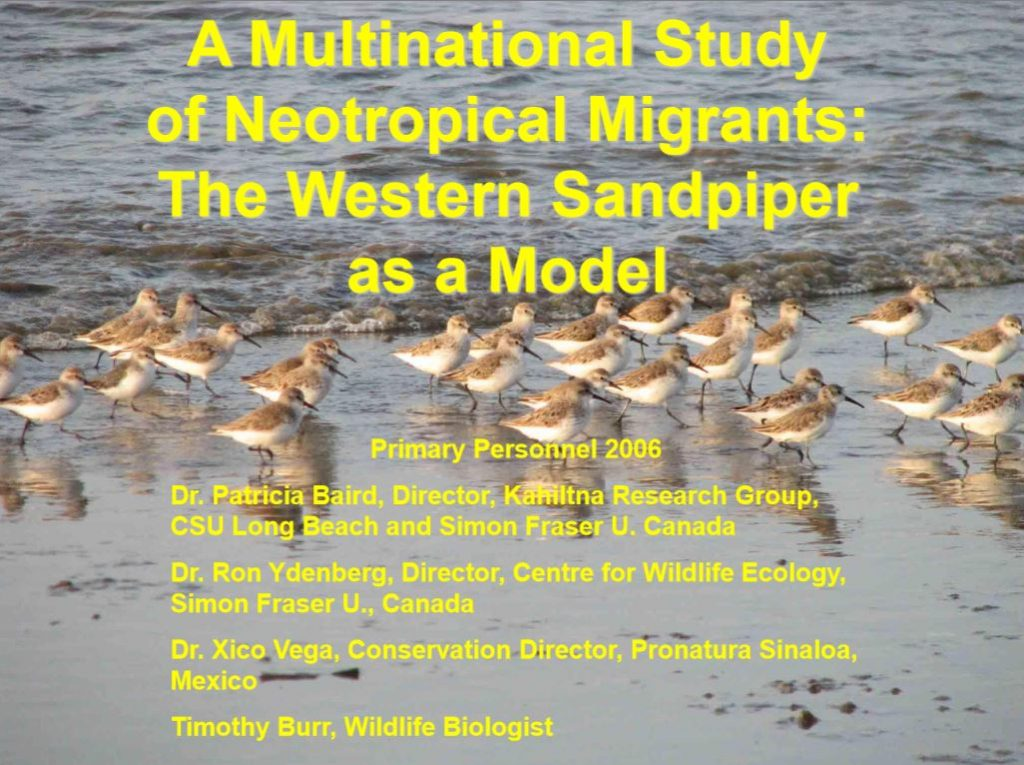 An example slide, featuring the presentations subtitle, over a group of sandpipers in front of the water's edge.