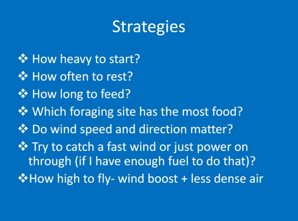 An example slide, laying out the strategies of study, including how long they feed, rest, and what they forage for.